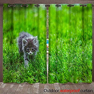 WinfreyDecor Outdoor Ultraviolet Protective Curtains Pussycat Baby Animals