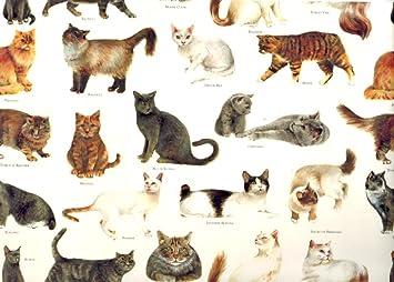Tassotti - Papel gatos de todo el mundo decorativo papel de ...
