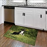 Durable Rug Border collie dog catching the fresbee on the green meadow Extra Absorbent W35'' x H23''
