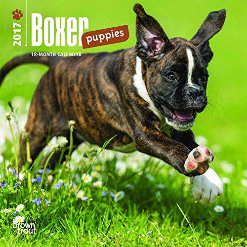 Boxer Puppies 2017 Mini 7x7 (Multilingual Edition)