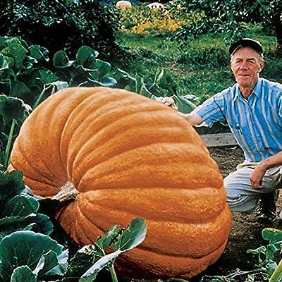 Park Seed Dill's Atlantic Giant Pumpkin Seeds
