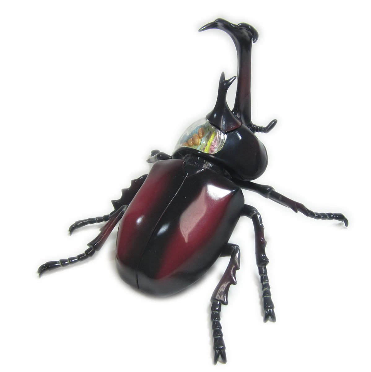 No.06 beetle anatomy model Skynet three-dimensional puzzle 4D VISION ...