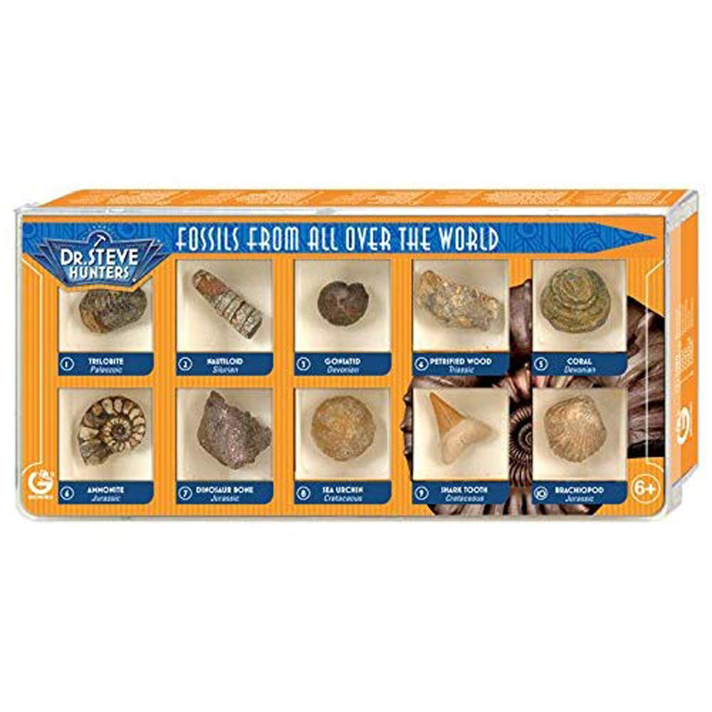 Dr. Steve Hunters ed502K–Fossils from all over the world, Fossil 10 Geoworld Eu Srl ED502K