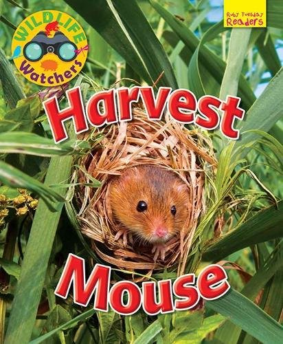 wildlife-watchers-harvest-mouse-2017-ruby-tuesday-readers