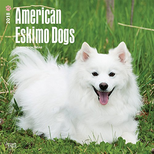 American Eskimo Dogs 2018 12 x 12 Inch Monthly Square Wall Calendar, Animals Dog Breeds American (English, French and Spanish Edition) (Eskimo American Designs)