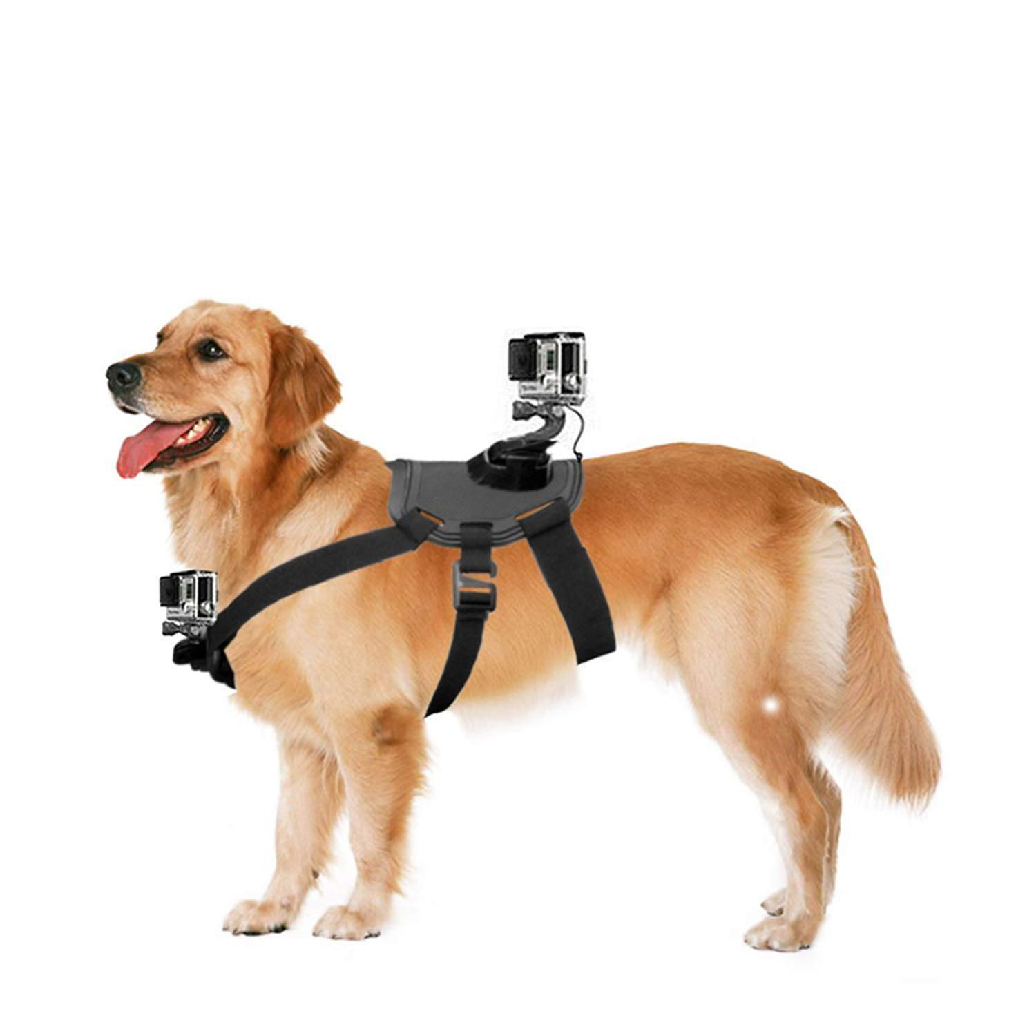 NEWTTY KAY Dog Harness Fetch Strap Belt Back Chest Mount with Adjustable Buckle Screw for GoPro Hero 7/6/5/5 Session/4 Session/4/3+/3/2/1 by NEWTTY KAY