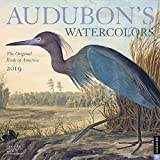 Audubon s Watercolors 2019 Wall Calendar