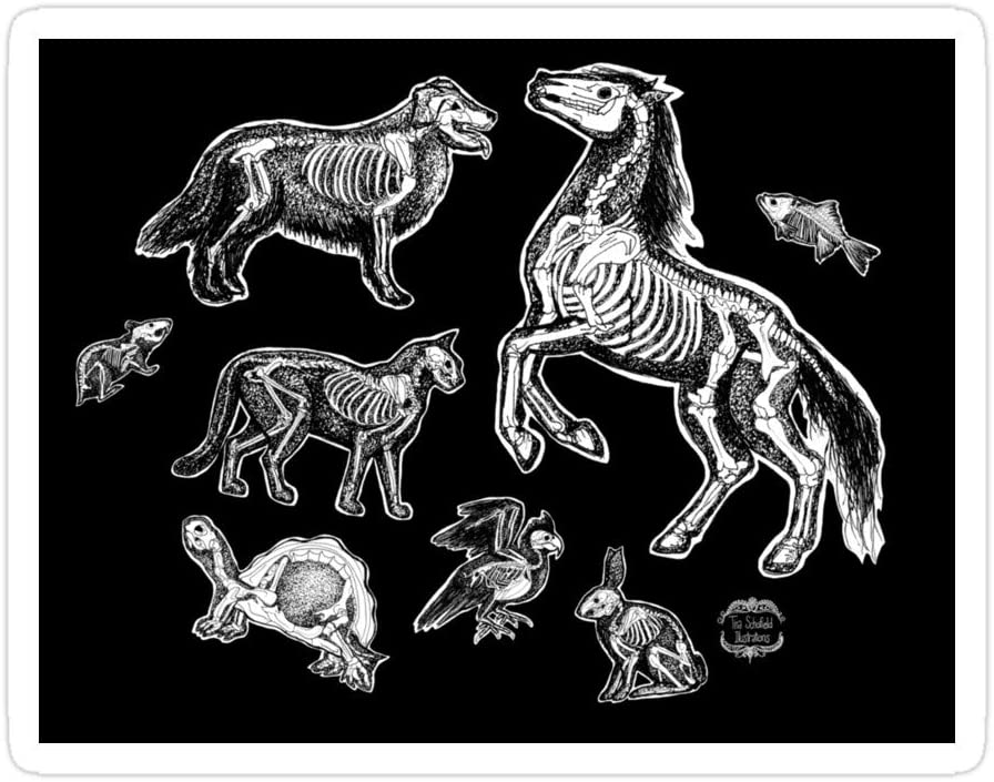 PRINTFIT (3 PCs/Pack) Veterinary Technician X-Ray Animal Bones Anatomy 3x4 Inch Die-Cut Stickers Decals for Laptop Window Car Bumper Helmet Water Bottle