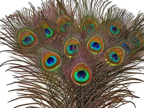 Costume changsha 20 Pcs Real Natural Peacock Eye Feathers for DIY Crafts Halloween,Wedding Party Decoration Natural Molted Peacock Feathers Mask