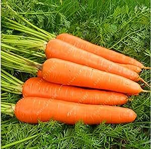 200pcs / planta semillas de zanahoria bolsa orgánicos de la herencia semillas de hortalizas de fruto semillas de zanahoria cinco pulgadas de ginseng en maceta de jardín de casa