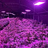 Cannalights 2000W LED Grow Light for Indoor