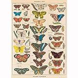 Decorative Wrap 20X28 Butterflies