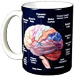 Brain 11 oz. Ceramic Coffee Mug by Wild Cotton