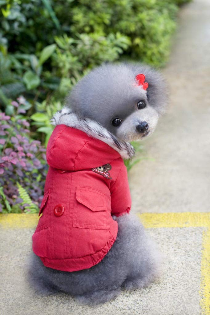 Red L Red L Doggy Costume Pet Supplies Misc Autumn and Winter New pet Clothing Dog Clothes Scarf Bear Two-Legged Cotton Coat (color   Red, Size   S) Pet Dog Clothes (color   Red, Size   L)