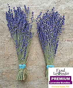 """Findlavender - Culinary Lavender Bundles - 10"""" - 14"""" Long - Can Be Used for Any Ocassion - Perfect for your wedding! 2 Bundles from the 2016 harvest"""