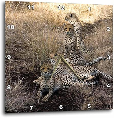 3dRose DPP_20108_2 South African 4 Cheetahs Posing Looking in Both Directions Wall Clock, 13 by 13