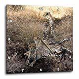 3dRose dpp_20108_2 South African 4 Cheetahs Posing Looking in Both Directions Wall Clock, 13 by 13″