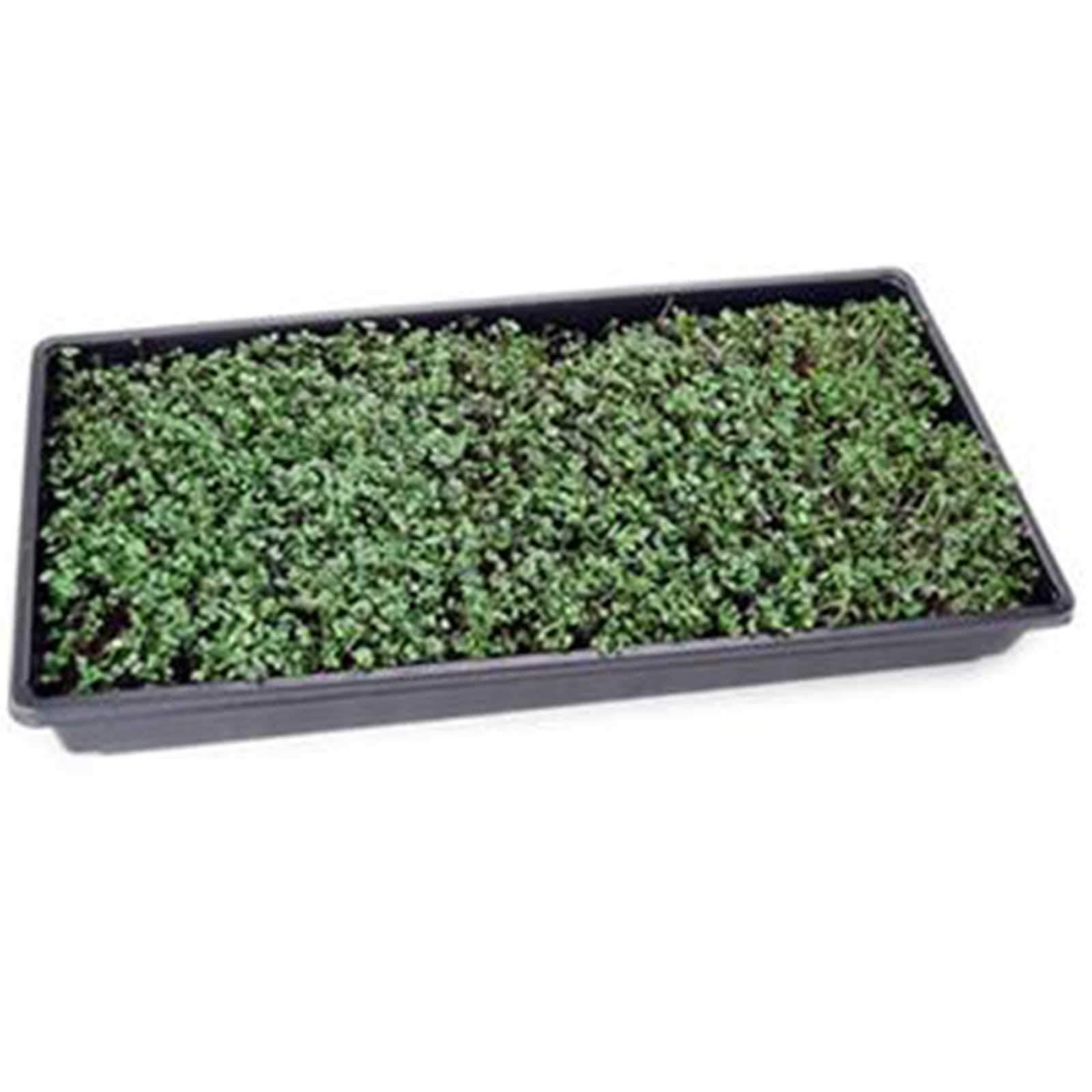 Basic Salad Mix Micro Greens Seeds: 25 Lb - Bulk Non-GMO Seed Blend: Broccoli, Kale, Kohlrabi, Cabbage, Arugula, More by Mountain Valley Seed Company (Image #4)