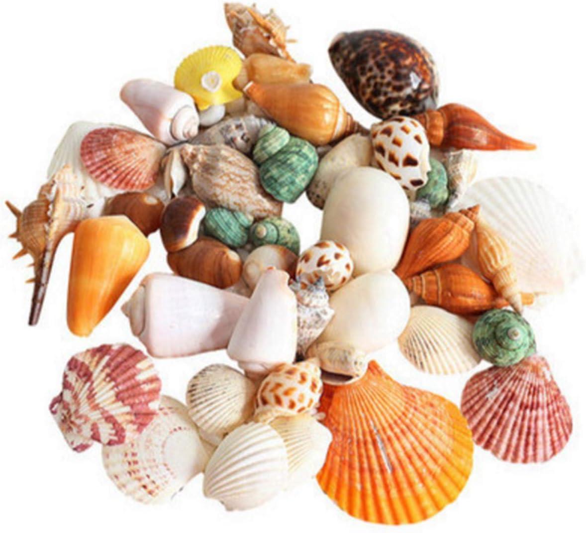 90 Pcs Sea Shells Mixed Ocean Beach Seashells, Colorful Natural Seashells Perfect Accents Fish Tank, Home Decorations, Beach Theme Party, Candle Making, Wedding Decor, DIY Crafts, Fish Tan
