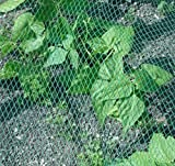 Anti-Bird Netting,13x32.5 Feet Plant Garden Bird