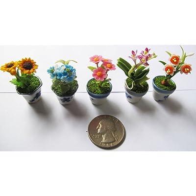Set 5 Lovely Mixs Plant Flower Dollhouse Miniature,Home Decoration: Toys & Games