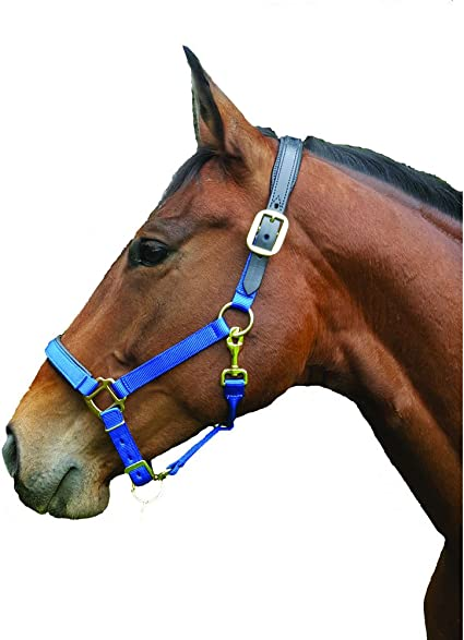 Intrepid International Thornhill Equine Athletics