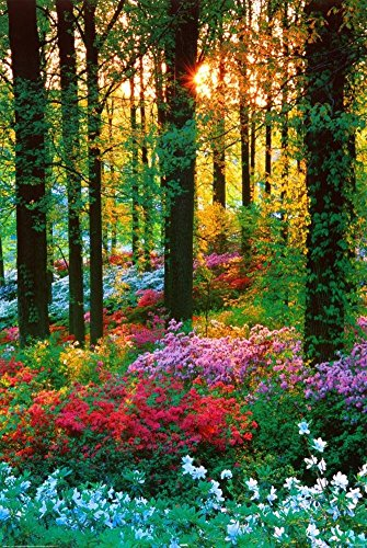Flower Forest Poster Print, 24x36 Collections Poster Print, 24x36 (Scenic Posters)