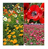 David's Garden Seeds Collection Set Flower Poppy W7743 (Multi) 4 Varieties 2500 Seeds (Open Pollinated, Heirloom, Organic)
