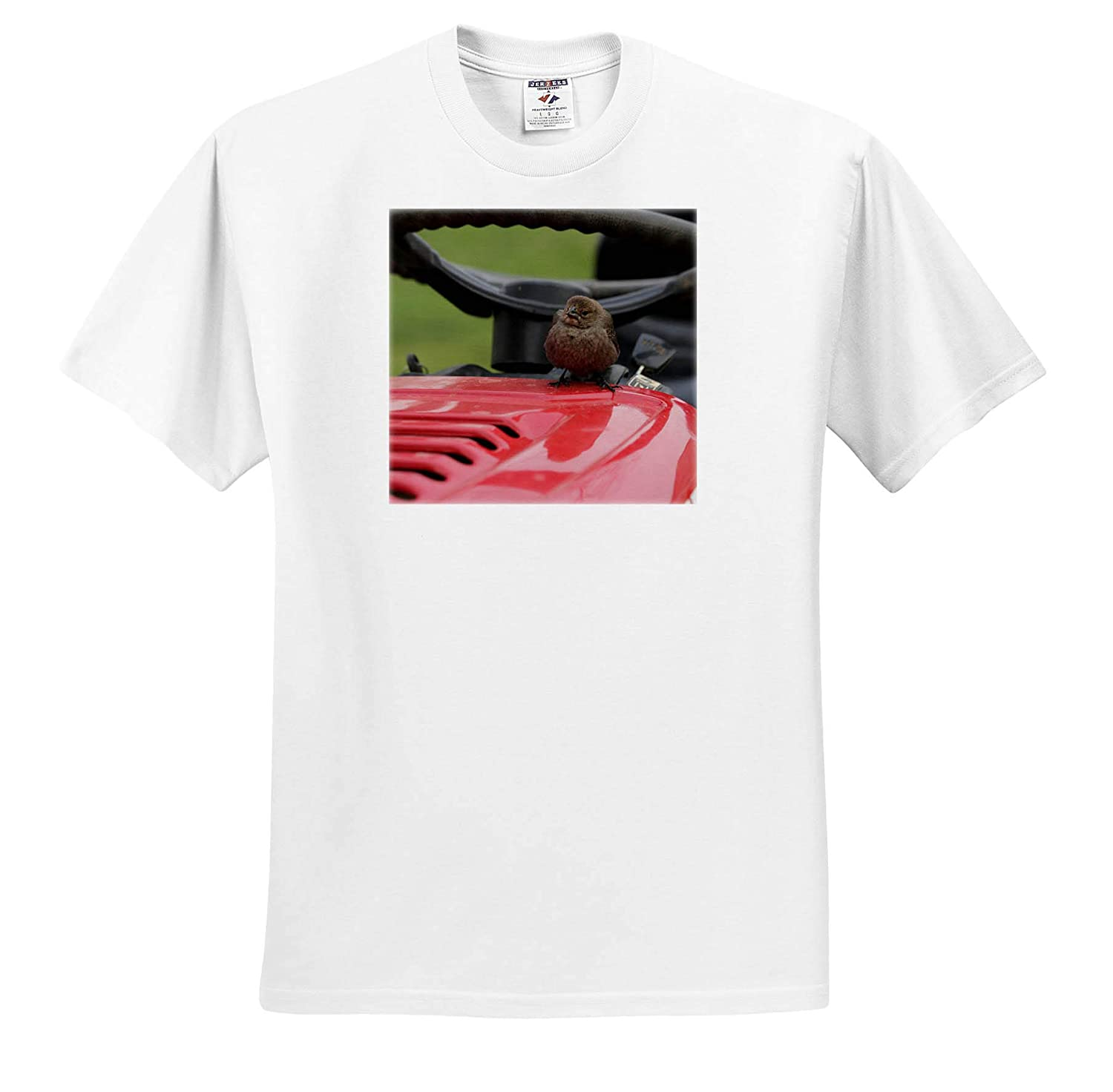 - T-Shirts Birds Photograph of a Silly Female Cowbird Taking a Ride on a Rider Mower 3dRose Stamp City