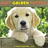 Just Golden Puppies 2018 Calendar