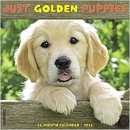 Just Golden Puppies 2018 Calendar: Willow Creek Press: 9781682345023