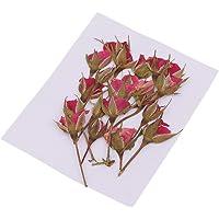 FLAMEER 20 Echt Vergiss Mich Nicht Gepresst Getrocknete Blumen Kunsthandwerk Scrapbooking Card