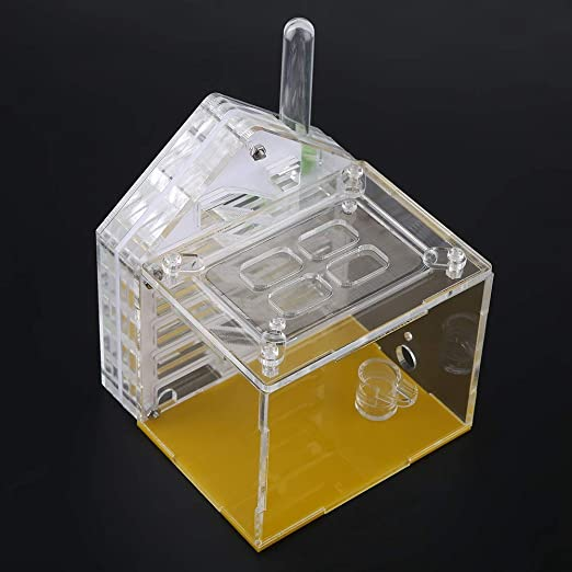 Duokon Ant Nest - Caja Cuadrada para Hormigas (acrílico), diseño ...