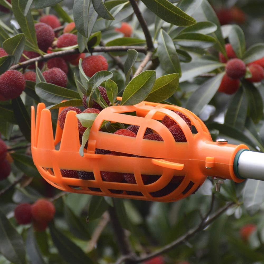 FADDR Color Naranja Recogedor de Fruta Ajustable, para jardiner/ía, Cesta Baja, Color Blanco y Naranja, sin Barra, pl/ástico Robusto, pr/áctico, /útil en Gran Altura