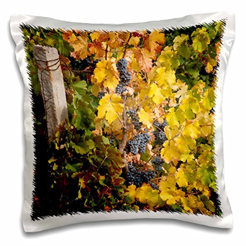 grapes-china-ningxia-merlot-grapes-at-domaine-helan-mountain-winery-16x16-inch-pillow-case