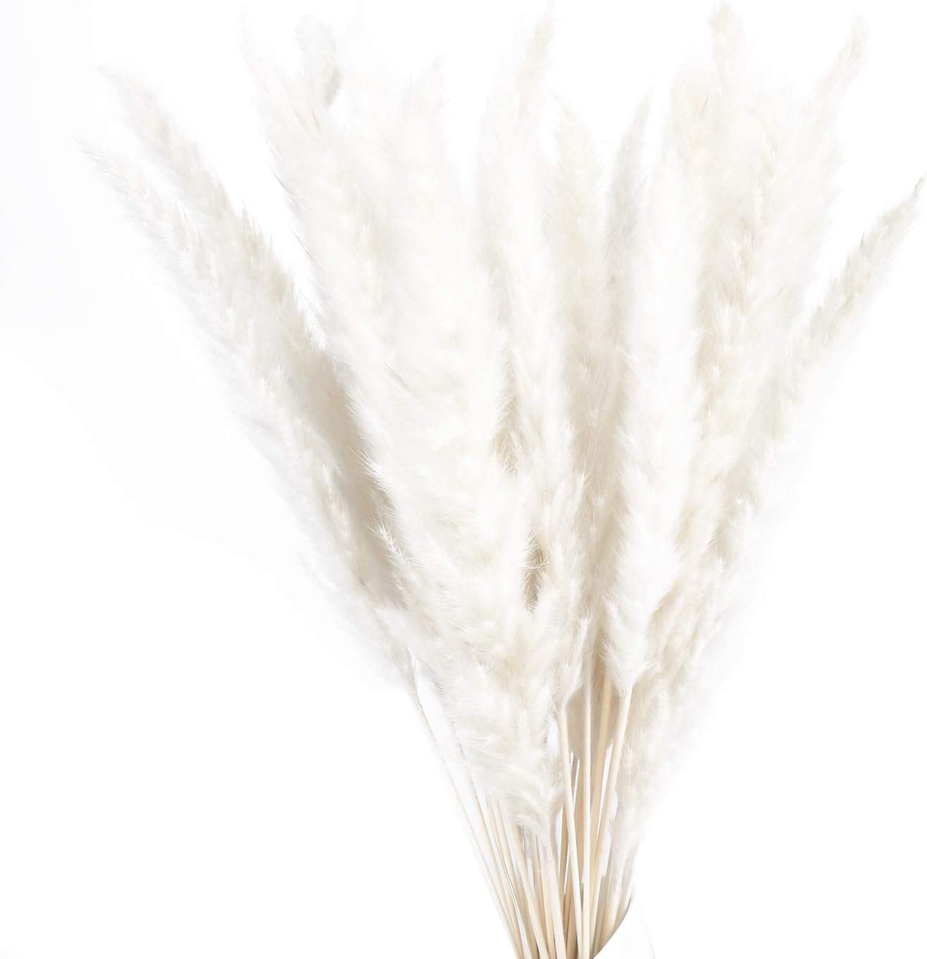30pcs Natural Dried Pampas Grass,Reed Plumes,Phragmites Flower for Wedding Home Living Room Decor (White)