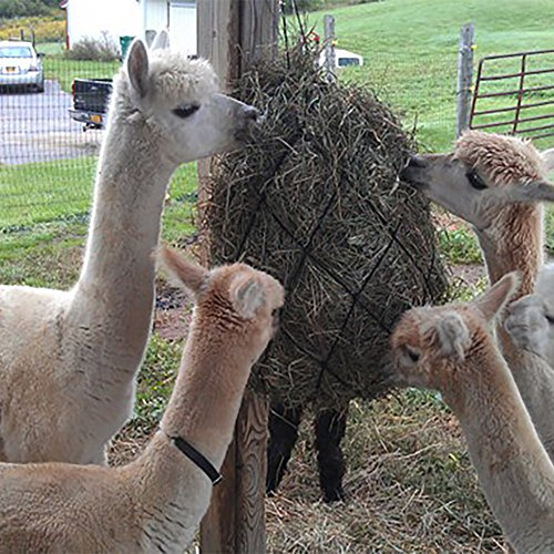 The 8 best horse hay nets with rings