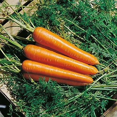 Carrot Nantindo F1 Seeds - Vegetable Seeds Package