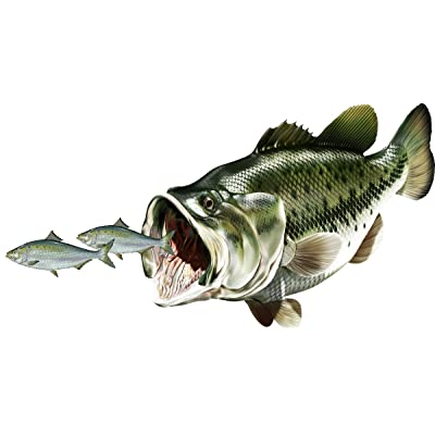 avgrafx Bass Chasing Shad Fish Fishing Color Decal 12x6 Laminated Car Boat Camper RV Truck: Automotive