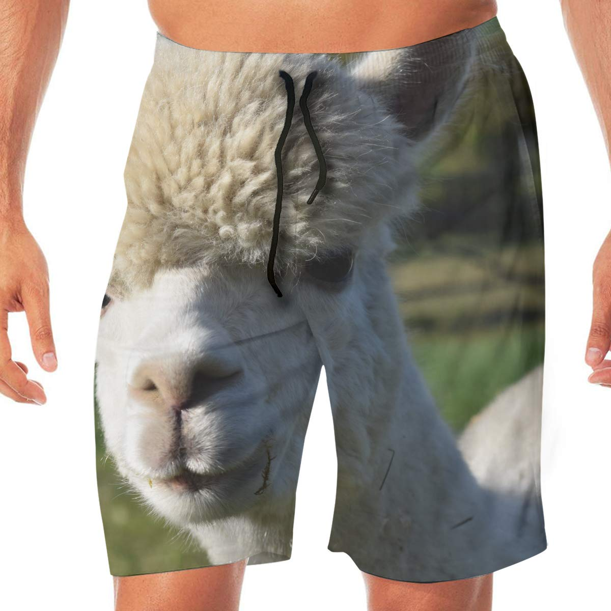 Alpaca Vicuna Mens Beach Shorts Chic Board Pants Adults Surf Beach Trunks Home Leisure Trousers