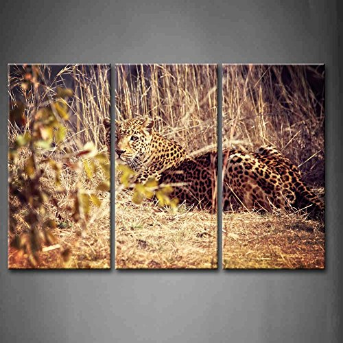 First Wall Art - 3 Panel Wall Art Leopard Portrait Luangwa National Park Zambia Seat In Grassland Painting Pictures Print On Canvas Animal The Picture For Home Modern Decoration piece (Stretched By Wooden Frame,Ready To Hang)