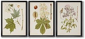 Wall Art, Home Décor, Rustic, Contemporary, Art Deco, Italian, Antique Leaves VII Black Framed Canvas, 3 Piece Set, 30X42