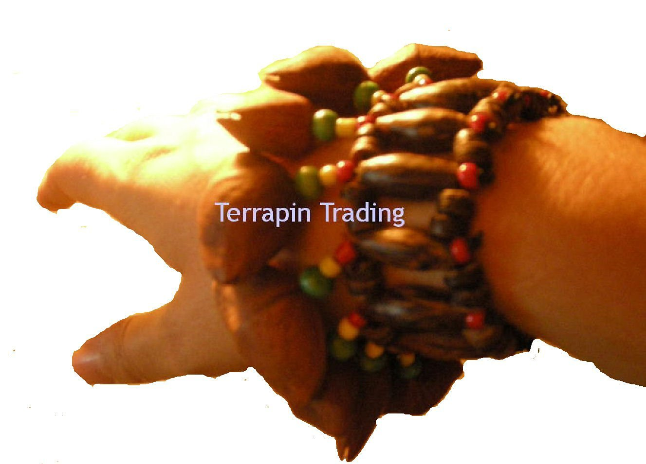 Fair Trade Amazonian Shaman Calabash Wrist / Leg Rattle made from Tapar Tree Nuts Terrapin Trading