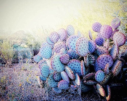 Desert photo nature photography cactus picture 8x10 inch print
