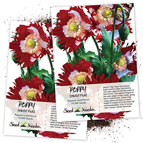 Papaver Somniferum Poppy Seeds - Seed Needs, Danish Flag Poppy (Papaver somniferum) Twin Pack of 10,000 Seeds Each