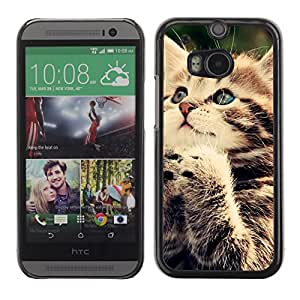 Hot Style Cell Phone PC Hard Case Cover // M00100362 animals funny cat // HTC One M8