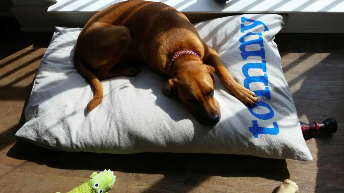 Furlap Personalized Dog Bed Duvet- Multiple sizes available