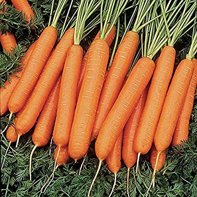 Nelson Hybrid Carrot 200 Seeds #8133 Item Upc#650348691691