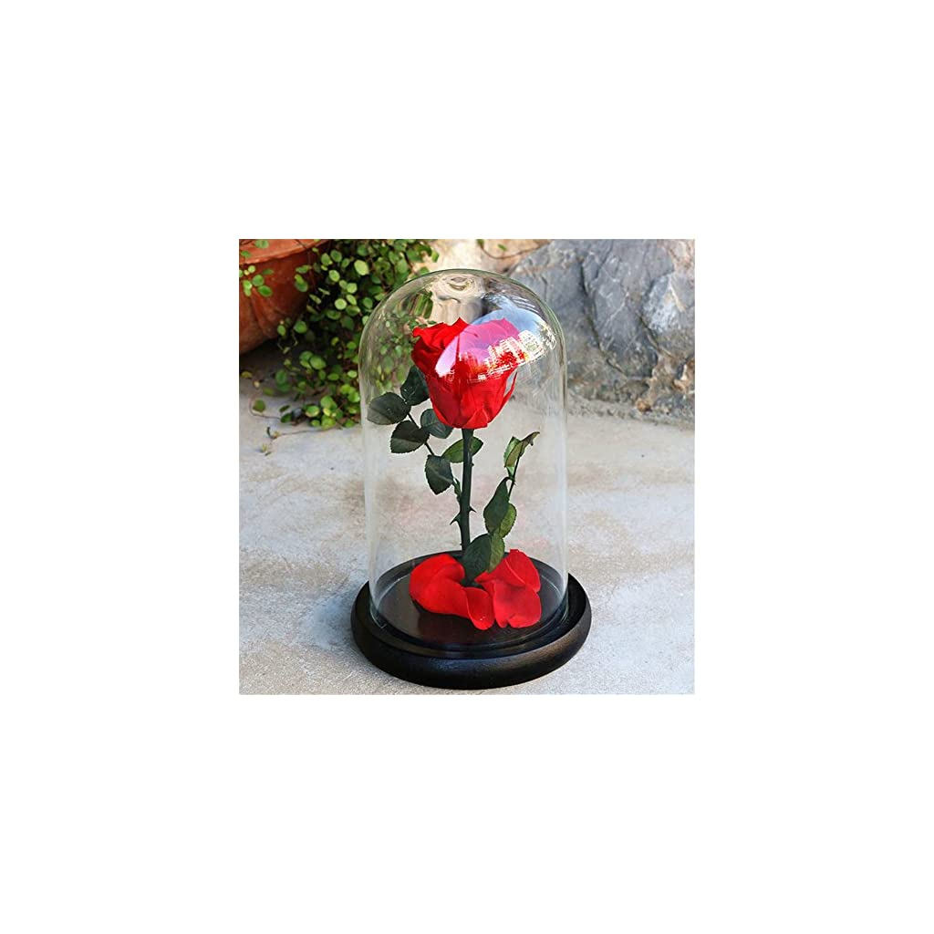 Janedream-Preserved-Fresh-Rose-Flower-with-Box-100-Real-Rose-Enchanted-Rose-Gift-Ideas-for-Valentines-Day-Anniversary-Birthday