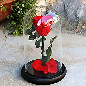 Janedream Preserved Fresh Rose Flower with Box 100% Real Rose Enchanted Rose Gift Ideas for Valentine's Day, Anniversary, Birthday 74
